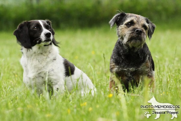 Sitzendes Hunde-Duo